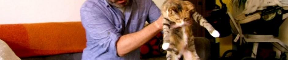 Dinge die du deiner Katze vorsingen kannst